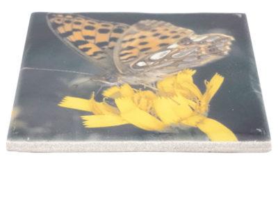 Vlinderprint op tegel